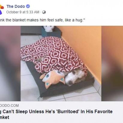 【海外発!Breaking News】大好きなブランケットに包まれて眠る犬「ハグと一緒で安心するのね」(アルゼンチン)