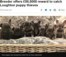 【海外発!Breaking News】盗まれた子犬11匹を連れ戻してくれたら…報酬725万円を提示したブリーダー(英)
