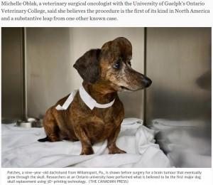 【海外発!Breaking News】獣医学界に大きな進歩 脳に腫瘍ができた犬、3Dプリンター作成の人工骨を移植(カナダ)