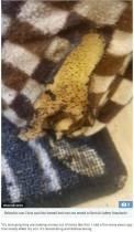 【海外発!Breaking News】Amazonで購入したペット用温暖マットから出火 子猫4匹を失った飼い主(英)