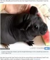 【海外発!Breaking News】犬と思って購入した子犬が「ネズミ科の動物では?」と話題に(中国)