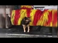 【海外発!Breaking News】洗車機で自分の体を器用に洗う犬(トルコ)<動画あり>