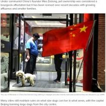 【海外発!Breaking News】公園での散歩禁止、綱は1メートルまで 厳しい犬規制始まる(中国)