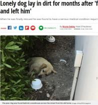 【海外発!Breaking News】引っ越した家族に置き去りにされた犬、救助されるも引き取り手見つからず(米)