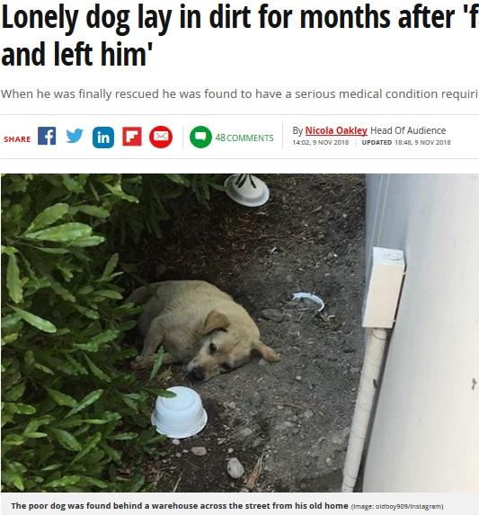 何か月もの間、放置されていた犬(画像は『Mirror 2018年11月9日付「Lonely dog lay in dirt for months after 'family moved away and left him'」(Image: oldboy909/Instagram)』のスクリーンショット)