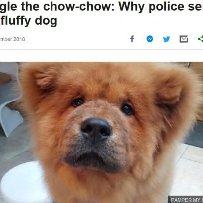 【海外発!Breaking News】警官に噛みつき拘留された子犬、無事に飼い主のもとへ戻される(英)