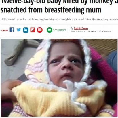 【海外発!Breaking News】サルが授乳中の母親から乳児を奪い死なせる(印)