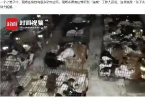 【海外発!Breaking News】盗まれた飼い猫375匹が違法屠殺場から救出される(中国)