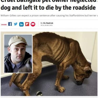 【海外発!Breaking News】がんを患う犬を飢えさせ、路上放置した飼い主に懲役刑の可能性(英)
