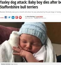飼い犬2頭に襲われた生後1か月の男児、入院先で死亡(英)