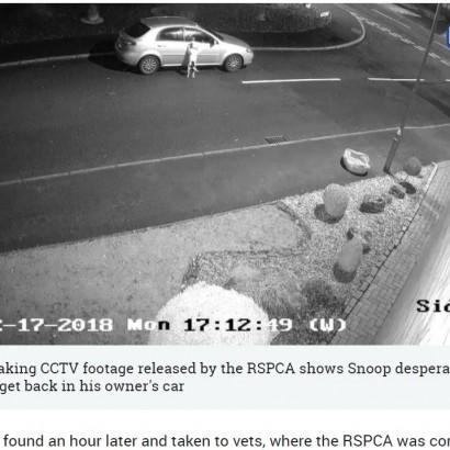 【海外発!Breaking News】監視カメラが捉えた、自分を捨てる飼い主に必死にすがりつく子犬の姿が涙を誘う(英)<動画あり>