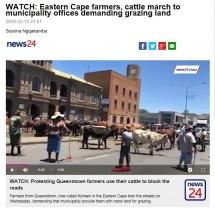 【海外発!Breaking News】安全な放牧地求め、牛が自治体ビル前に集結(南ア)