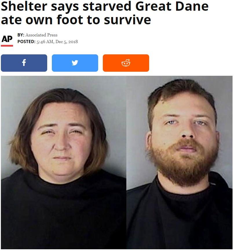 飼い犬を虐待していたカップル(画像は『WPTV-TV 2018年12月5日付「Shelter says starved Great Dane ate own foot to survive」(Greenwood County Detention Center)』のスクリーンショット)