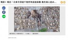【海外発!Breaking News】台湾台東県の田んぼで野鳥の大量死が見つかる