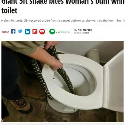 【海外発!Breaking News】トイレに体長1.6mのニシキヘビ、便座に座った女性に噛みつく(豪)