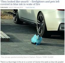 【海外発!Breaking News】インクを保管した納屋の火事で多くのペットが青く染まる(英)