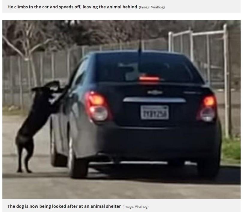 飼い主と思われる男性の車を必死に追いかける犬(画像は『Mirror 2019年2月8日付「Loyal dog desperately chases after cruel owner's car after being dumped beside lake」(Image: Viralhog)』のスクリーンショット)