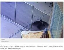 【海外発!Breaking News】庭で遊んでいた子犬、鷹に襲われ危機一髪で飼い主が救出(米)<動画あり>