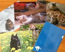 岩合光昭撮影の猫が魅力的! 「季節のねこクリアファイル」をベローチェやシャノアールでプレゼント