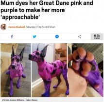【海外発!Breaking News】「みんなを怖がらせないように」 グレート・デーンをピンクと紫に染めた飼い主(米)