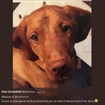 【海外発!Breaking News】キシリトール入りブラウニーを食べたせいで 愛犬を亡くした飼い主が注意喚起(英)