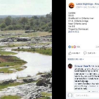 【海外発!Breaking News】川の氾濫で孤立したキリン、3日後に死亡 国立公園局「自然の成り行きに任せた」(南ア)