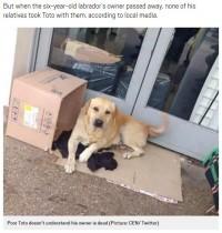 """【海外発!Breaking News】亡き飼い主を病院玄関で待ち続けたアルゼンチンの""""忠犬ハチ公"""""""