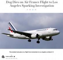 【海外発!Breaking News】エールフランスKLM機内でハスキー犬死亡 貨物室の酸素不足が原因か