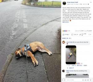 【海外発!Breaking News】気に入らない散歩道で死んだふりをする犬(スコットランド)