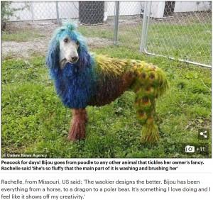 孔雀に変身したビジュー(画像は『Mail Online 2019年3月22日付「This ISN'T a polar bear: So can you guess what creature is in disguise?」(Caters News Agency)』のスクリーンショット)