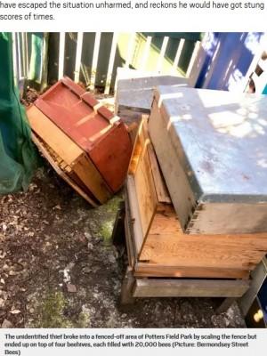 【海外発!Breaking News】フェンスから蜂の巣箱に落ちた強盗未遂犯、8万匹から猛攻撃(英)