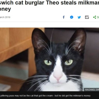 """【海外発!Breaking News】盗みを続ける""""泥棒猫""""ついに現金まで 飼い主「恥ずかしい気持ちでいっぱい」(英)"""
