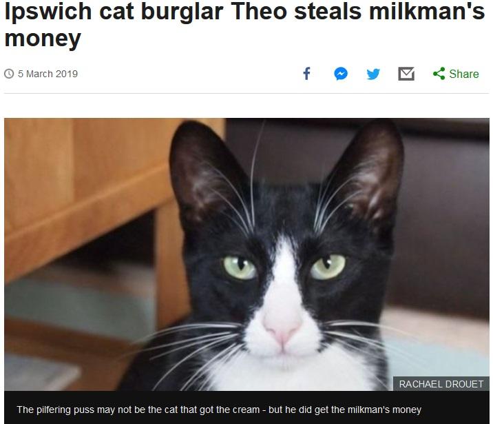 牛乳配達人のお金を盗んだ猫(画像は『BBC News 2019年3月5日付「Ipswich cat burglar Theo steals milkman's money」(RACHAEL DROUET)』のスクリーンショット)