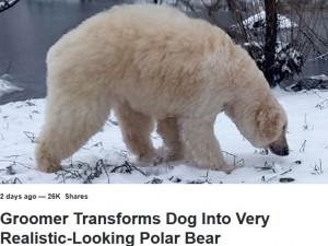 【海外発!Breaking News】どう見てもホッキョクグマ 飼い犬プードルの変化を楽しむペット美容師(米)