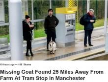 【海外発!Breaking News】なぜホームに? 行方不明のヤギ、農場から40km離れた駅で見つかる(英)