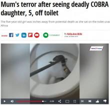 【海外発!Breaking News】便器の中から顔を出した猛毒コブラに一家騒然(南ア)<動画あり>