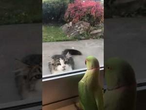 【海外発!Breaking News】窓の外にいる猫に「いないいないばぁ」を続けるインコ(ニュージーランド)<動画あり>