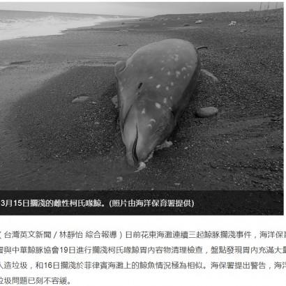 【海外発!Breaking News】打ち上げられたクジラの胃にビニール袋 お腹には赤ちゃんも(台湾)