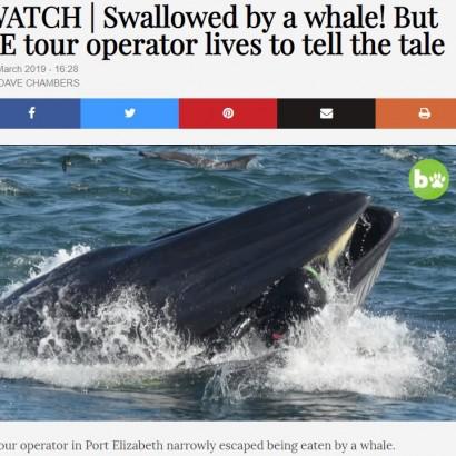 【海外発!Breaking News】クジラに飲まれかけた男性 「助かったのは奇跡」(南ア)<動画あり>