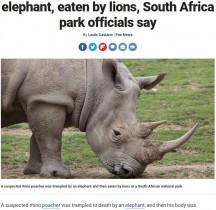 【海外発!Breaking News】サイの密猟者、象に踏み殺された後ライオンの餌食となる(南ア)