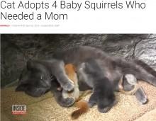 我が子4匹に加えリス4匹の母親になったネコ(ウクライナ)<動画あり>