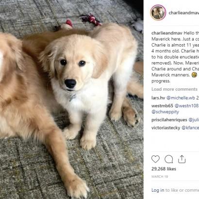 【海外発!Breaking News】盲目の老犬をそばで支える生後4か月の仔犬 「2頭はいつも一緒」(米)