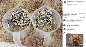 """警察犬""""オーディン""""に刺さっていた針毛(画像は『Odin & Raven Coos County Sheriff's K9's 2019年4月20日付Facebook』のスクリーンショット)"""