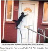 【海外発!Breaking News】玄関のドアをノックする礼儀正しいネコ(英)<動画あり>