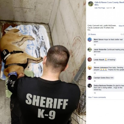 【海外発!Breaking News】ヤマアラシに200本の針毛を食らった警察犬 指名手配犯を追跡中に(米)