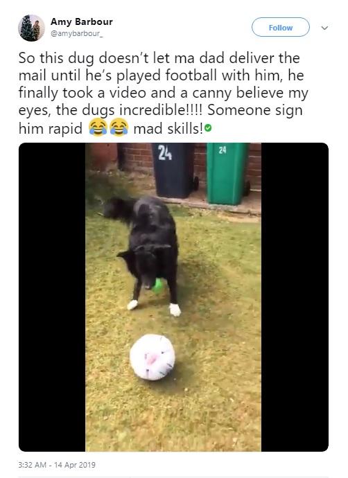 サッカーに夢中なボーダー・コリー(画像は『Amy Barbour 2019年4月14日付Twitter「So this dug doesn't let ma dad deliver the mail until he's played football with him, he finally took a video and a canny believe my eyes, the dugs incredible!!!!」』のスクリーンショット)