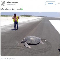 【海外発!Breaking News】砂浜に戻ったつもりのカメ、産卵したのは新空港(モルディブ)
