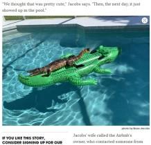 【海外発!Breaking News】ワニが浮き輪に恋? プールに浮かんだワニ型の浮き輪の上で寛ぐ(米)
