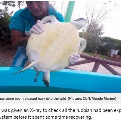 【海外発!Breaking News】プラスチックを排泄するカメ ゴミだらけの海に待ったなし(アルゼンチン)<動画あり>