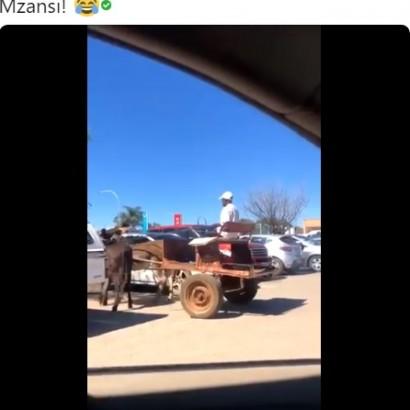 【海外発!Breaking News】ロバ馬車運転手の手綱さばきに称賛の声、ミラーなしで駐車場から見事にバックで出発(南ア)<動画あり>